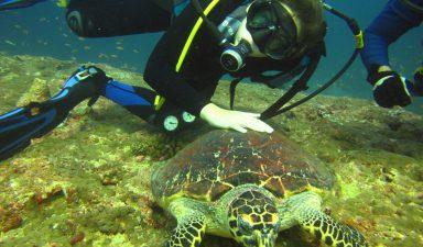 Diving-near-Kyrenia.jpg